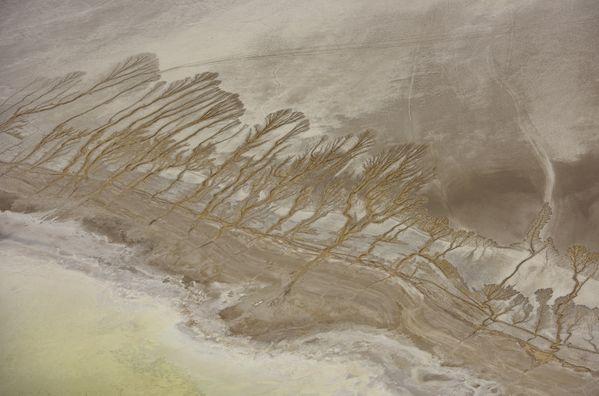 Desert Trees thumbnail