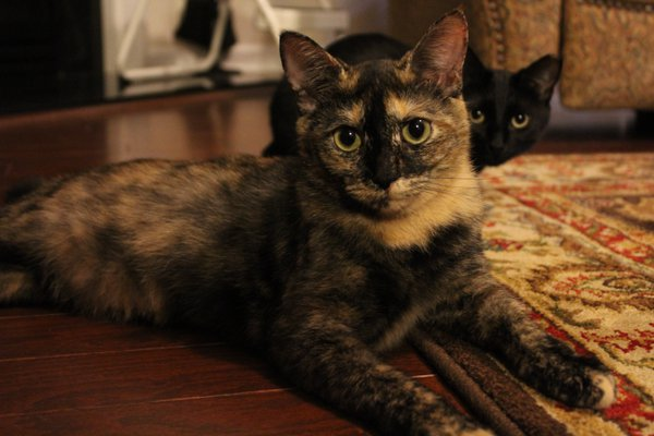 Here Kitty Kitty thumbnail