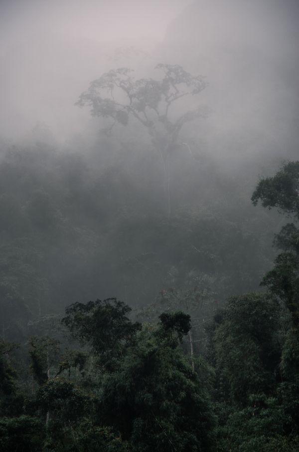Foggy jungle thumbnail