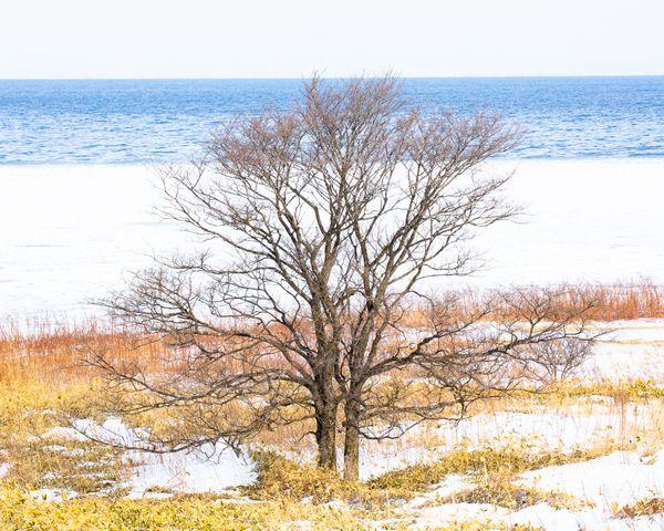 United tree thumbnail