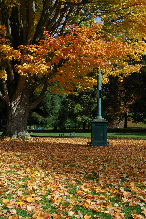 FALL IN THE PARK thumbnail