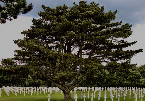 A lone tree at the American Cemetary in Normandy, France. thumbnail