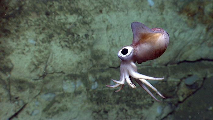 A bobtail