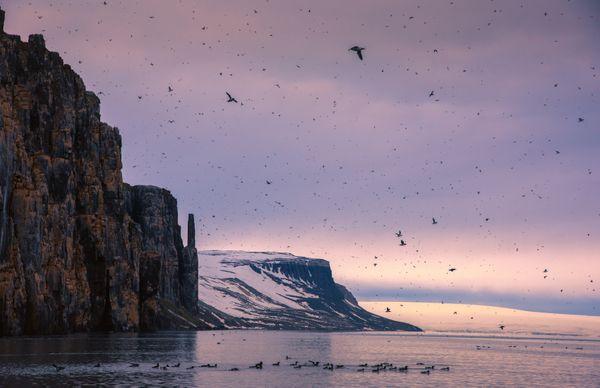 Arctic beauty... thumbnail