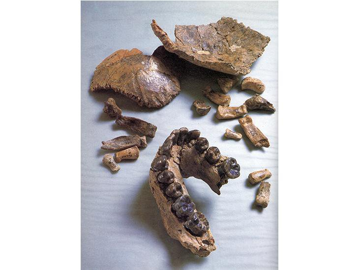 Oldest Human Fossil Unearthed in Ethiopia