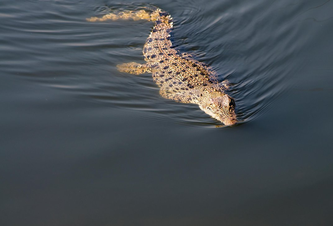 From Jellyfish to Crocodiles: Where to See Unusual Migrations