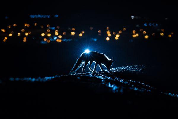 The night light and the Desert Fox thumbnail