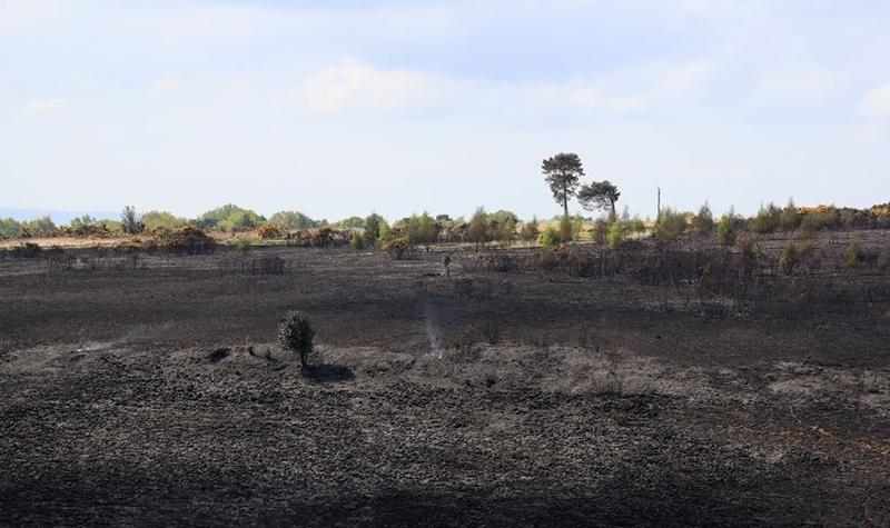Ashdown forest fire.jpg