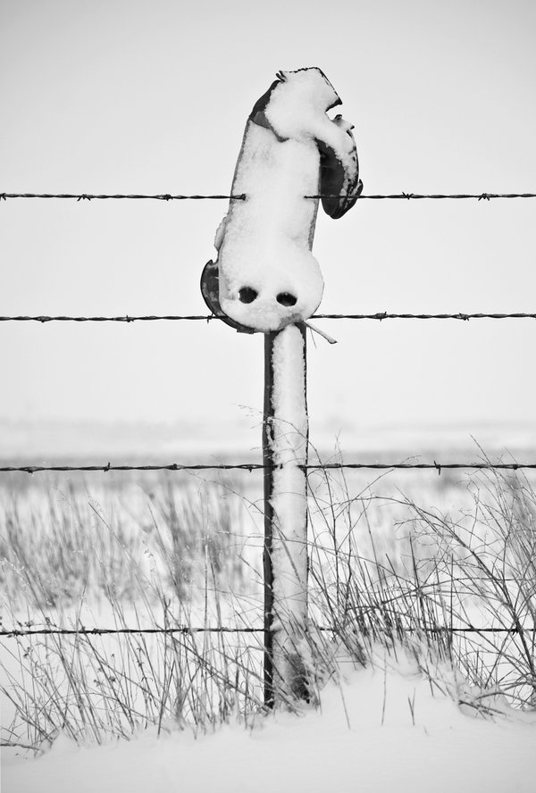 Snow-covered Cowboy Boot on a Fence Post thumbnail
