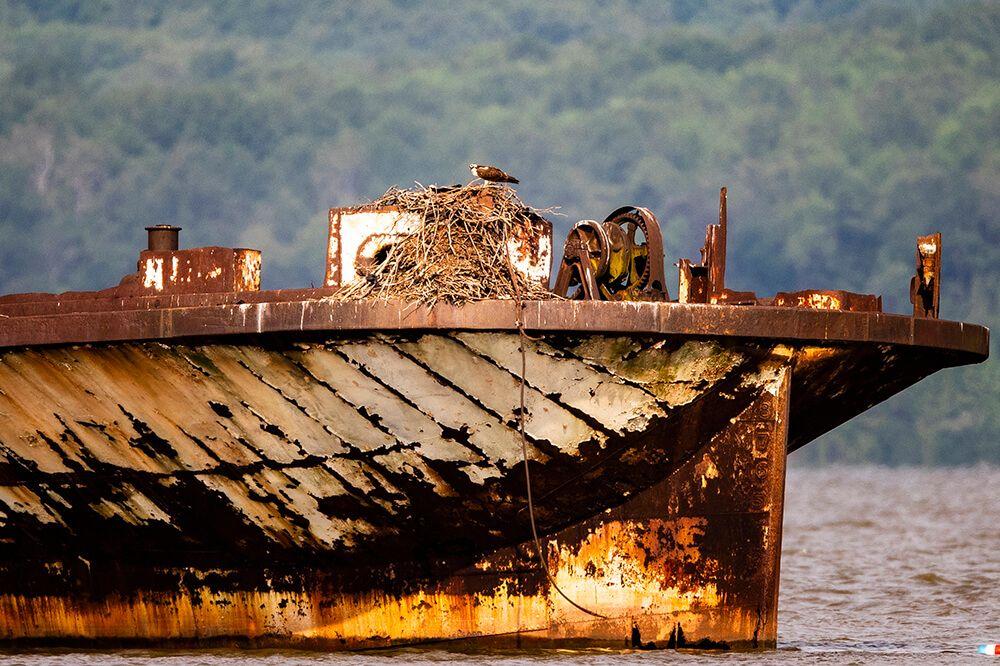 mb-nest-on-ship-1000.jpg