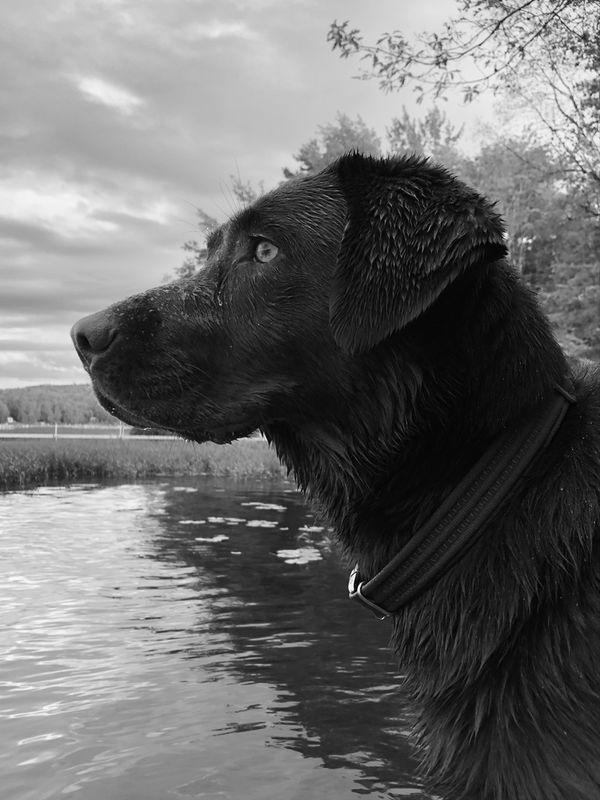 Holly gazing out onto Trout Lake thumbnail