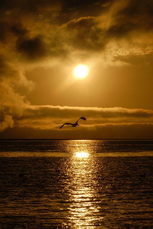 Pelican Sun thumbnail