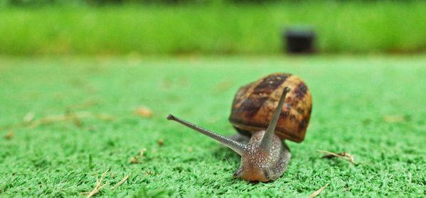 A snail leaving a trail. thumbnail