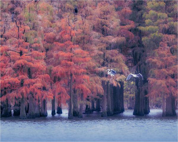 Secret territory of chishan lake thumbnail