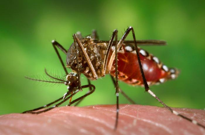 The World's Megacities Are Making Dengue Deadlier