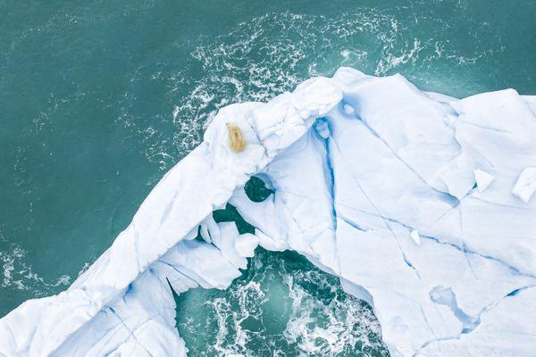Above the polar bear thumbnail