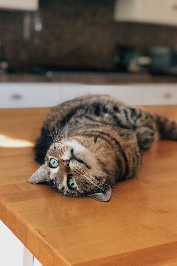 Kitten thumbnail