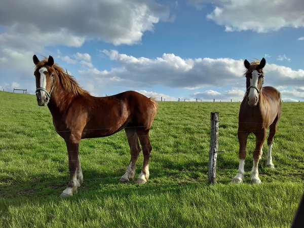 Amish Horses thumbnail