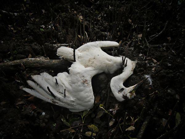 The Fallen Egret thumbnail