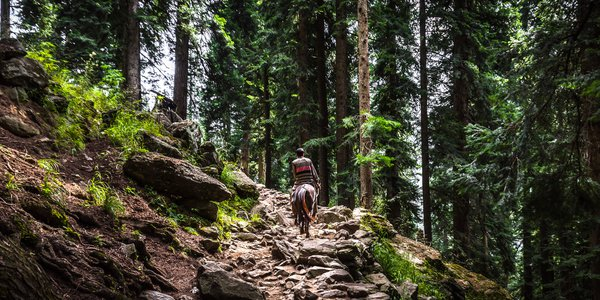 On a horse in the forest thumbnail
