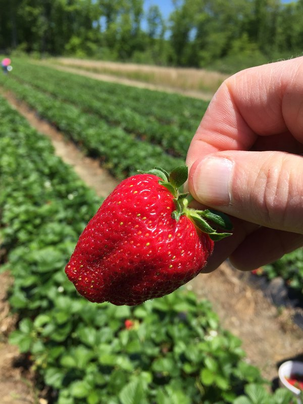 Strawberry in the raw  thumbnail