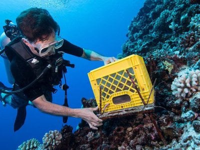 Chris Meyer, a marine invertebrate zoologist at the Smithsonian's National Museum of Natural History, dives around French Polynesia with equipment used to track coral reef health.