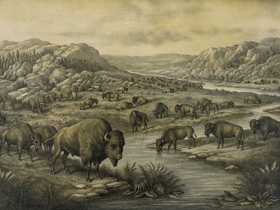Buffaloes at Rest recalls a time when bison were plentiful. When the print was created in 1911, only about 1,350 remained.