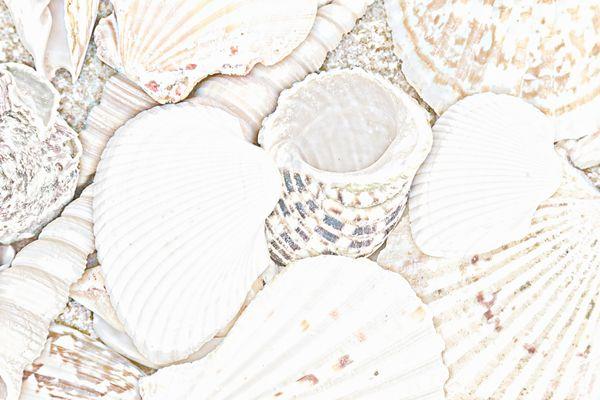 Seashells Digital Art thumbnail