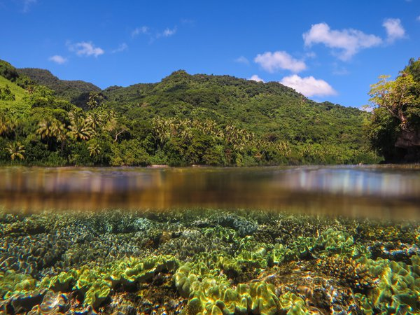 Fiji Landscape and Leather Corals thumbnail