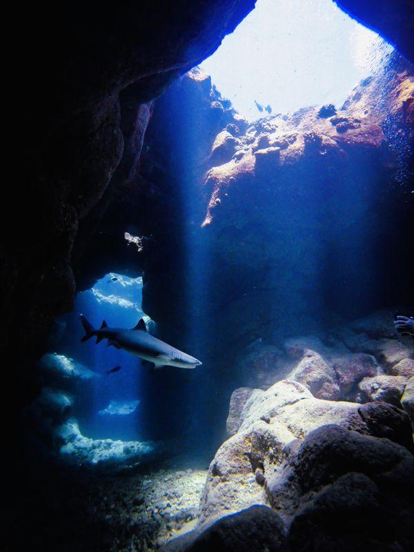 Whitetip reef shark inside Suck 'Em Up Lava Tube thumbnail