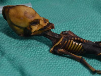 Researchers have analyzed the DNA of this mummified specimen from Atacama region of Chile.