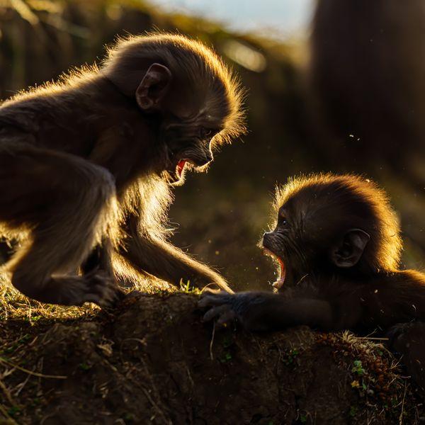 Infants at play. thumbnail