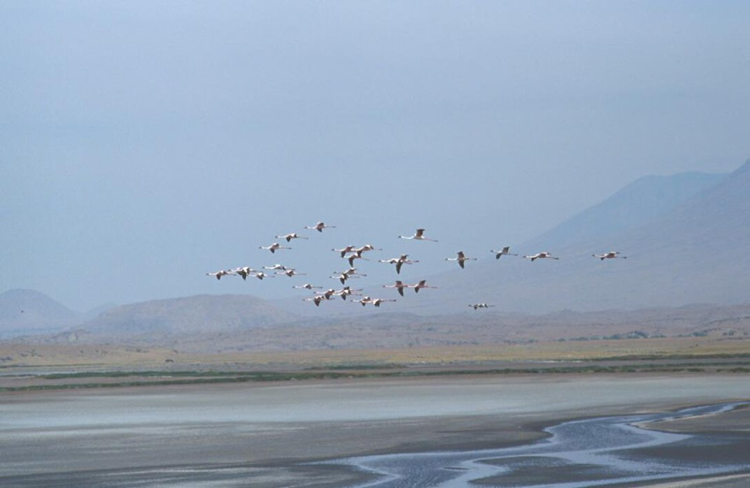 The Deadly Lake Where 75 Percent of the World's Lesser Flamingos Are Born