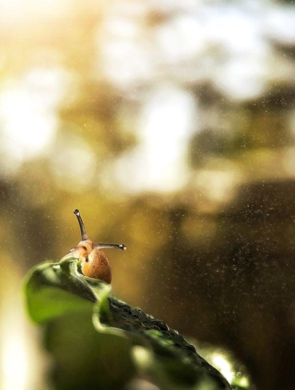 A snail on a plant thumbnail