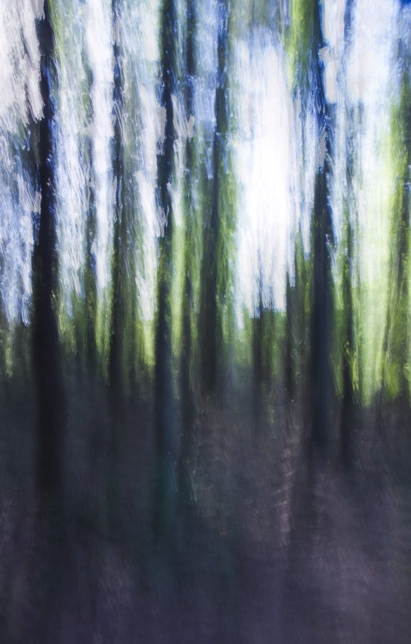 The Woods thumbnail