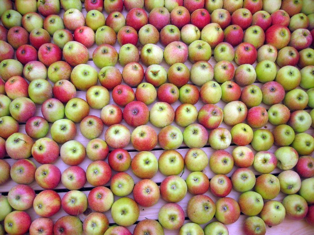 05_09_2014_apples.jpg