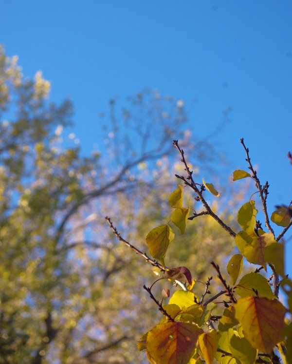 First turn of leaves thumbnail
