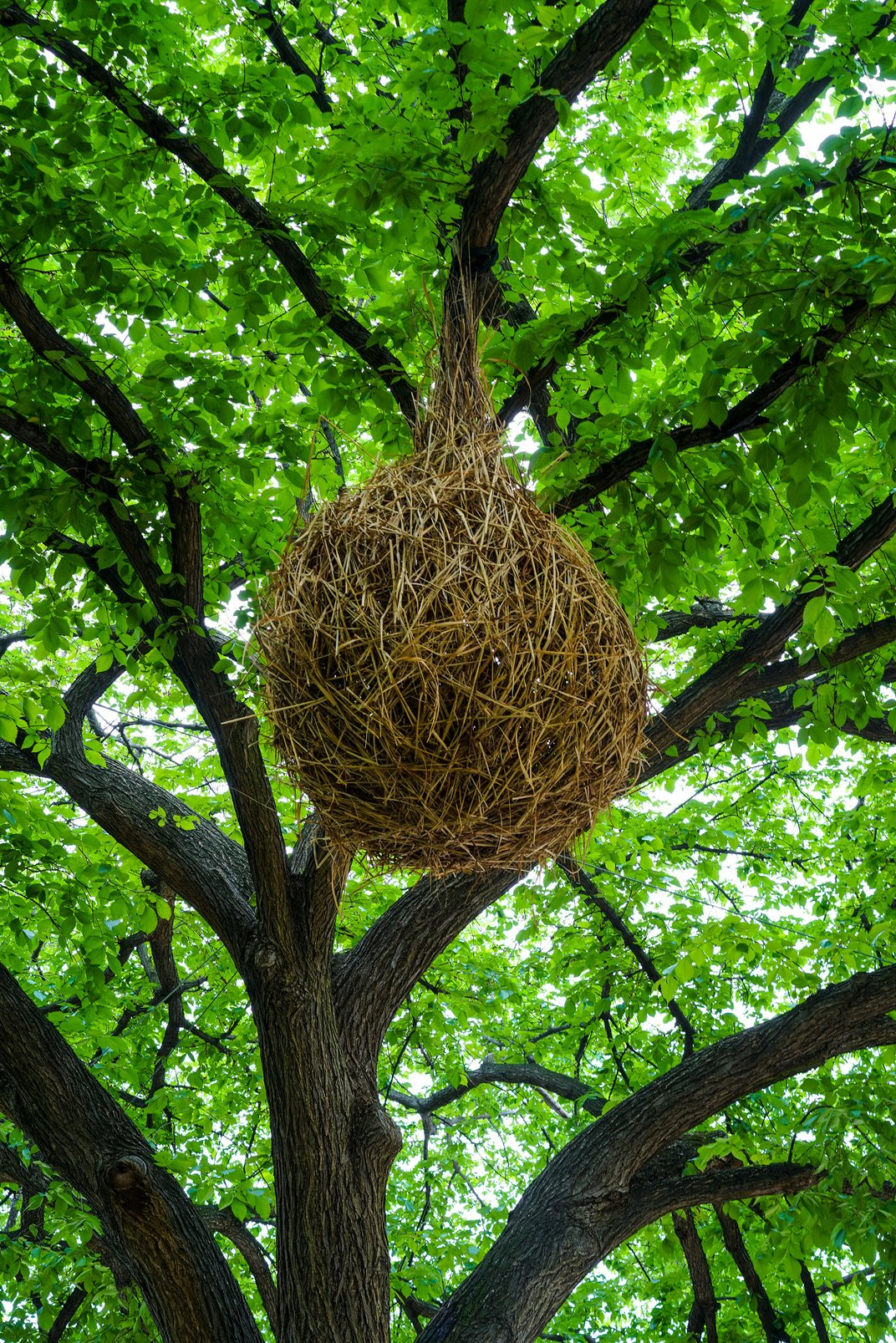 The Gardens Around the National Mall Are Growing Giant Nests and Fanciful Tunnels