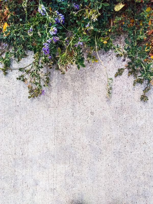 Where the sidewalk ends thumbnail