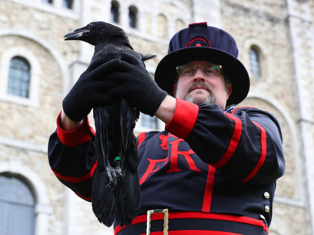 Ravenmaster Chris Skaife holds Branwen, the newest bird to join the Tower of London's roost.