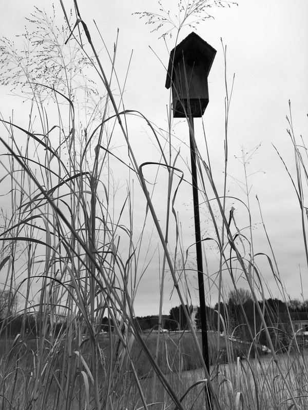 In the tall grass thumbnail