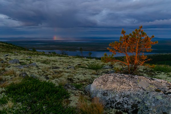 Fleeting northern rainbow thumbnail