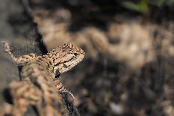 A Lizard in the Sun thumbnail