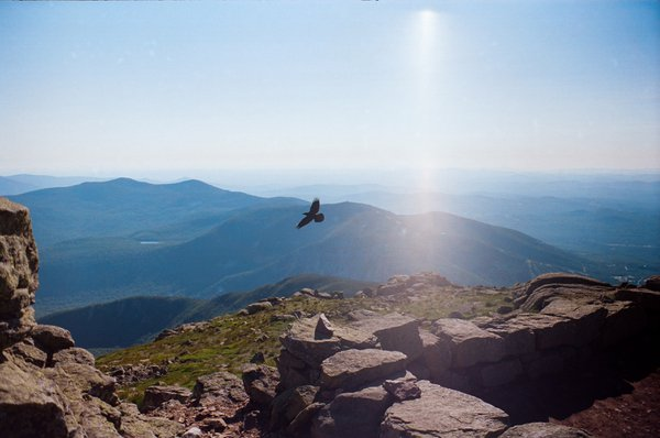 A crow on the White Mountains thumbnail