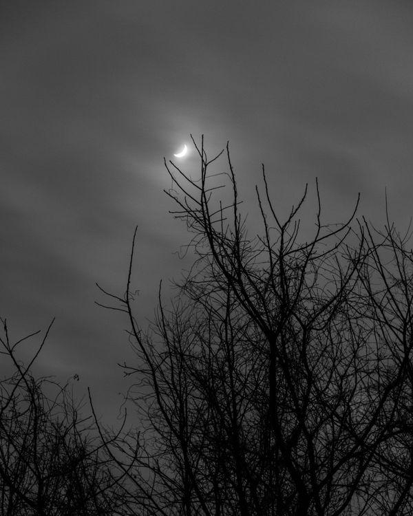 Moon over the Tree thumbnail