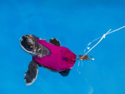 """""""I'm swimmering! For science!"""""""