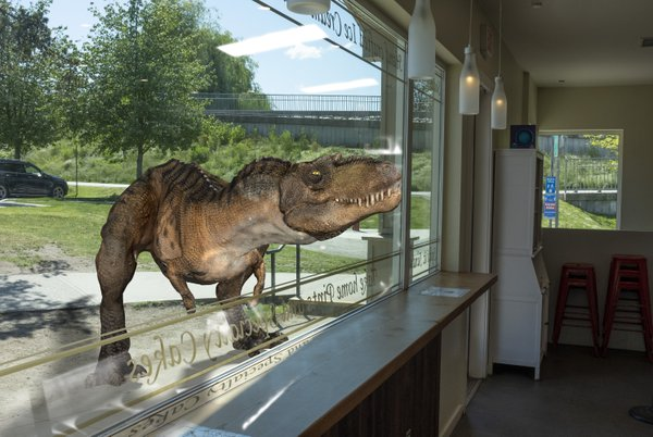A dinosaur puts his nose to the window of an ice cream store. thumbnail