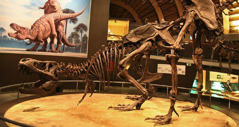 A pair of Tyrannosaurus restored in the act at Spain's Jurassic Museum of Asturias