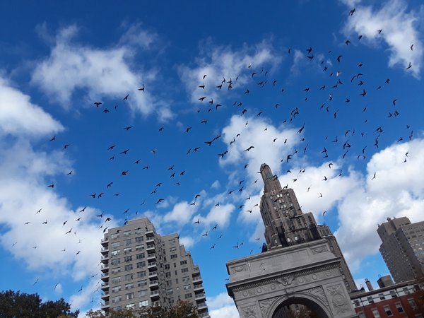 Birds Ascend a upon Union Square Park thumbnail