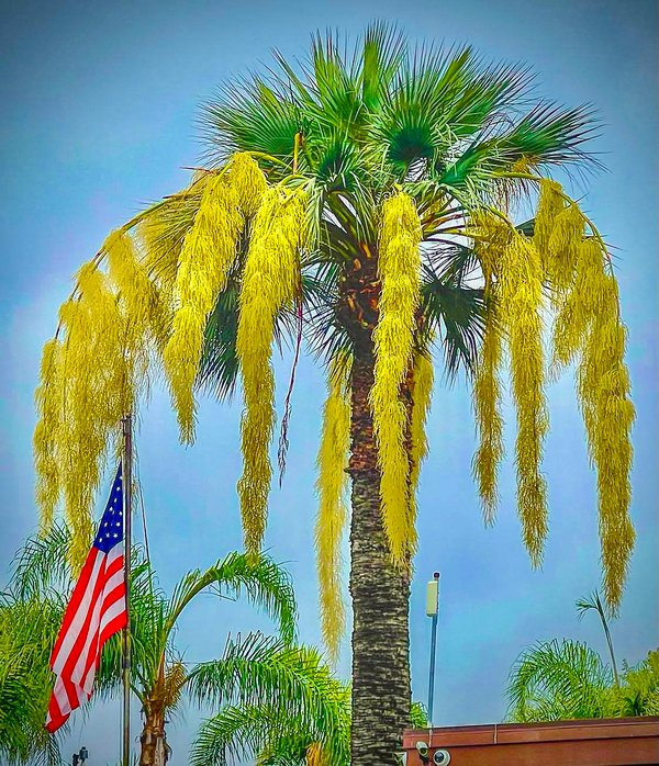 Summer in Westminster, California thumbnail